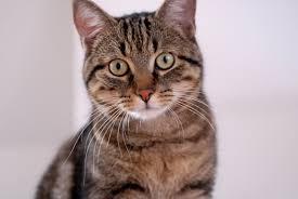 cat sitter doenca renal cronica em gatos