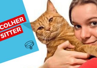 cat sitter thumbnail como escolher