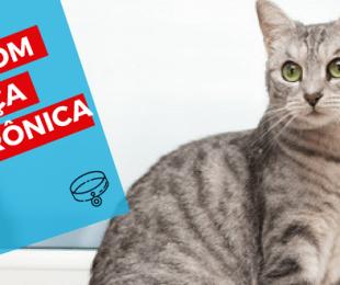 cat sitter thumbnail gatos com doenca renal cronica