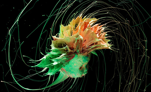 Colorful Photos of Paint Being Flung from Barbie Heads and Various Objects spin 9