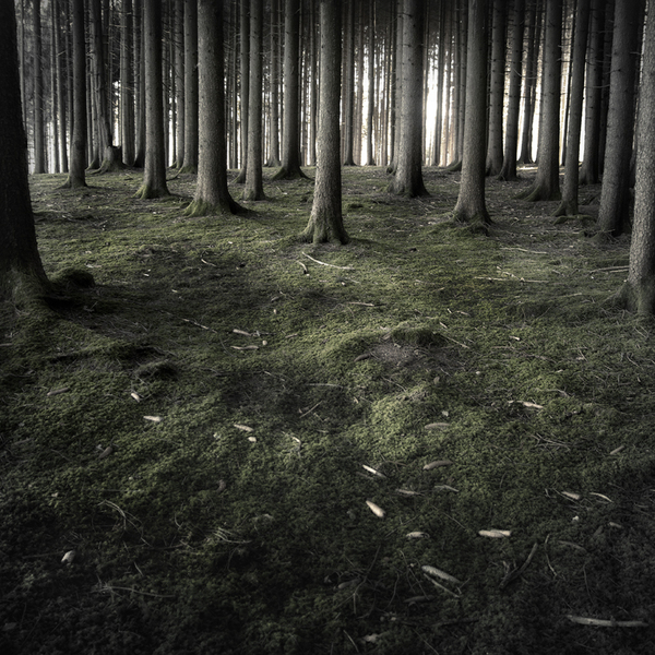 The Forest Photography of Jürgen Heckel 0ee29eda93d127223cf57629e842a241