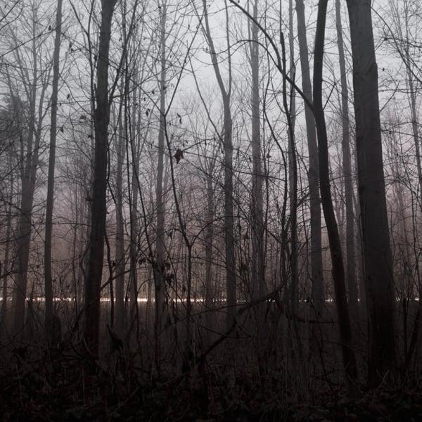 The Forest Photography of Jürgen Heckel 1113edfba865c277f7c0c30f199662b9