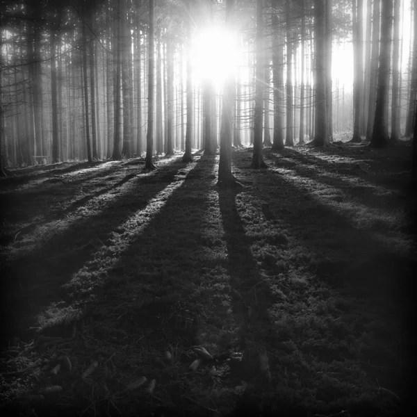 The Forest Photography of Jürgen Heckel 4a9759e4acb06991db1fc7daa11af9ef