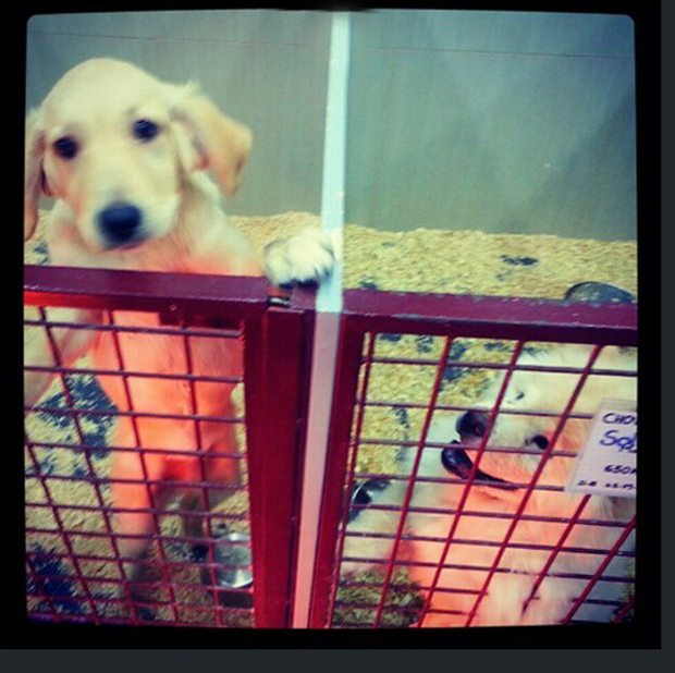 Instagram Under Fire for Hosting Photos for Live Animal Sellers ScreenHunter 108 Aug. 07 16.091