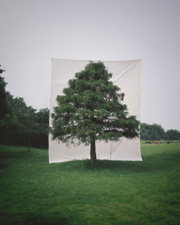 Photographs of Outdoor Trees Framed by Giant White Canvases Tree 10 2006