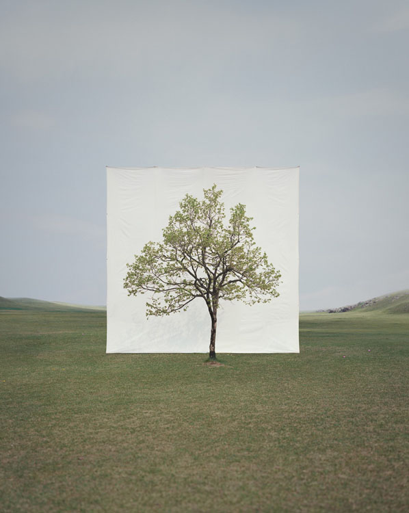 Photographs of Outdoor Trees Framed by Giant White Canvases Tree 14 2009