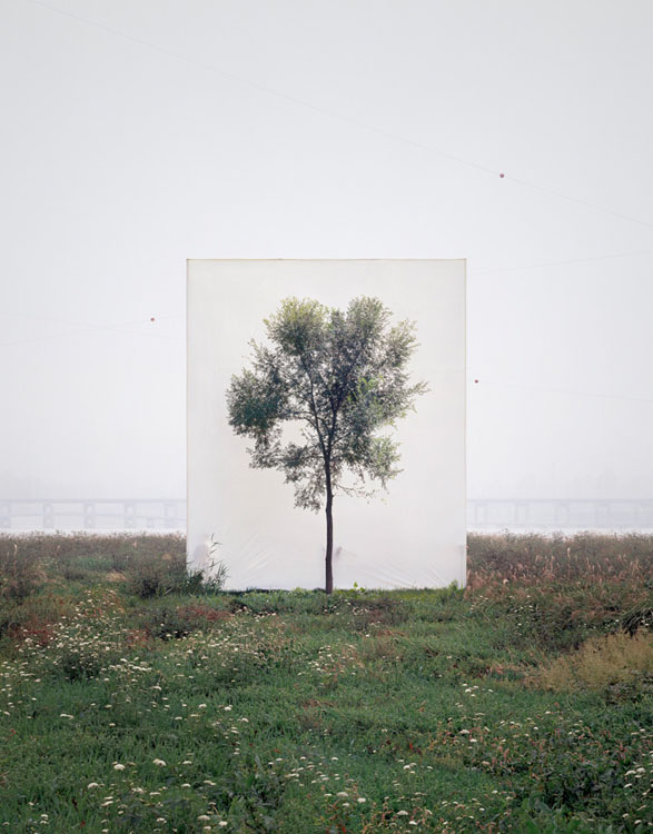 Photographs of Outdoor Trees Framed by Giant White Canvases Tree 6 2008