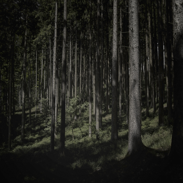 The Forest Photography of Jürgen Heckel a0fc84f5dde0e32243169020f173e70c