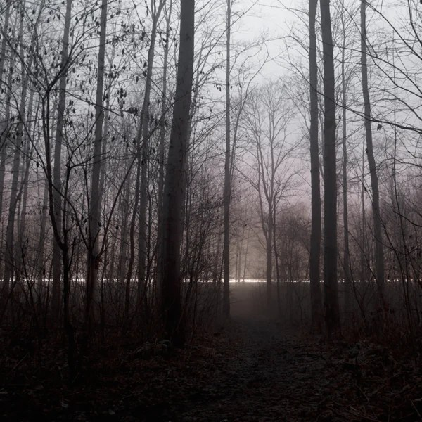 The Forest Photography of Jürgen Heckel cf0b69b9c617c6883adb6b29904e5d87