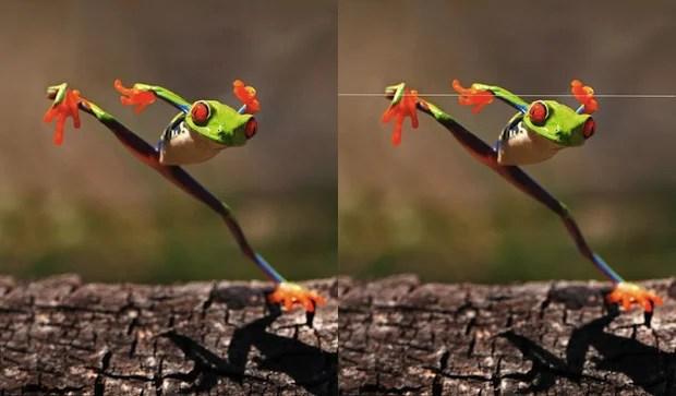 Photo Analysis Accuses Some Photogs of Faking Cute Animal Photos in Cruel Ways cruelfakes1