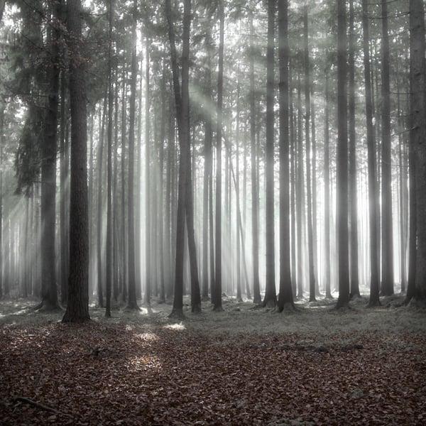 The Forest Photography of Jürgen Heckel eeb1b4abb4c1b18444517b2bfc2b34c3