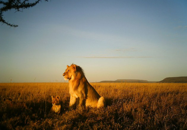 Camera Trap Images Offer a One of a Kind Look at Life on the Serengeti serengeti1
