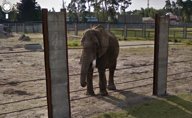Tour Some of the Worlds Most Famous Zoos, Now on Google Street View streetviewzoo1