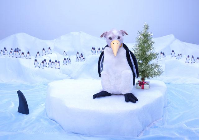Pingüino 2011