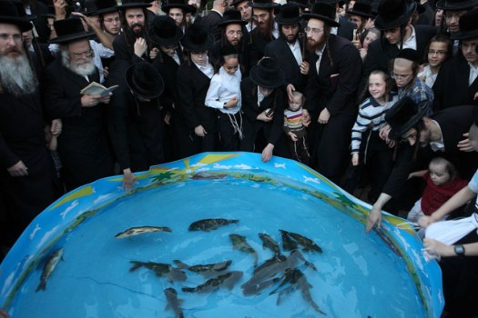 Orthodox Jews have a service called Ditch where they pray and use fish in the atonement for their sins.
