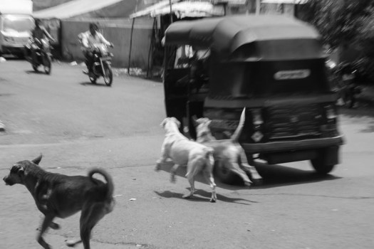 This sight is so common. We see it all day. Most of the drivers are either negligent or ignorant to strays. A lot of accidents happen just because of that.