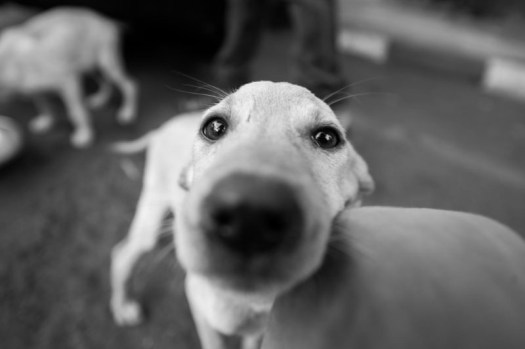 A dog poses for a quick photograph.