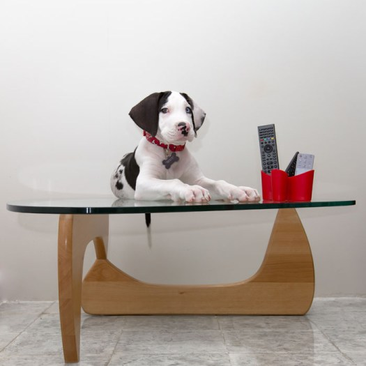 """Centerpiece dane is a very useful accessory for getting the remotes without having to reach for it.... the only problem is the occasional disappearance of snacks and drool on the remotes..."""