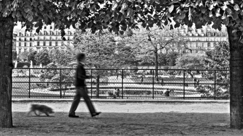 walking-dog-in-tuileries-gardens-paris