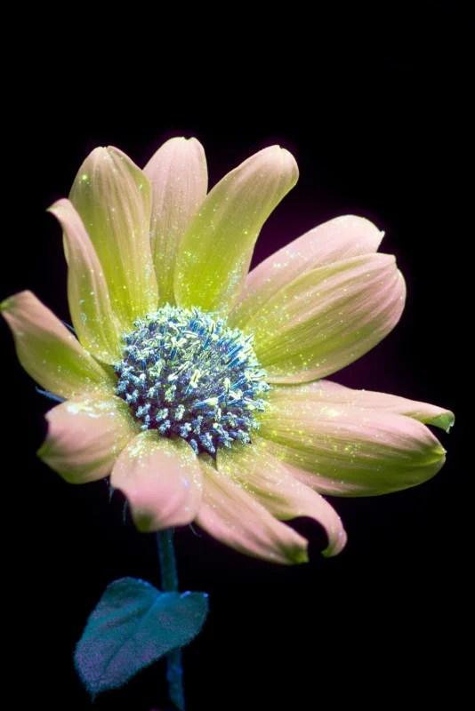Fluorescent Light Plants