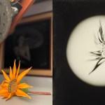 Tintypes realizzati utilizzando lenti di messa a fuoco come lenti