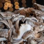 Timelapse mostra il processo avvincente di un fungo Shiitake in crescita