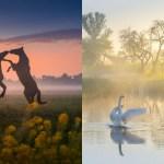 Foto magiche della primavera nei Paesi Bassi