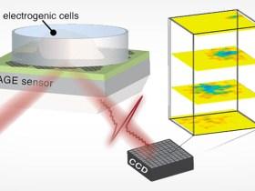 La rivoluzionaria fotocamera al grafene registra i segnali elettrici di un cuore