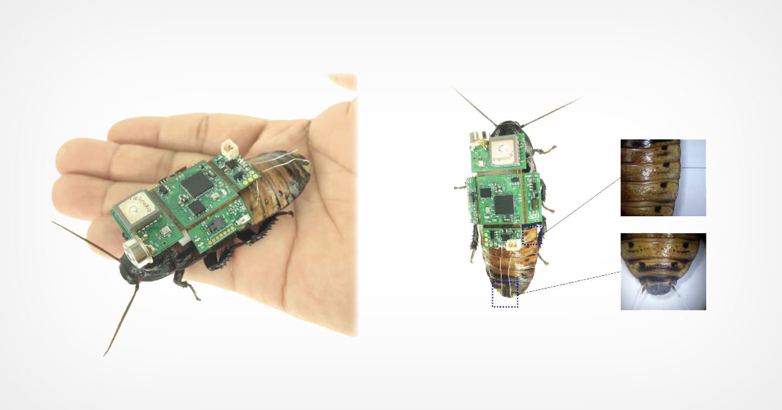 Gli scienziati creano una telecamera per scarafaggi cyborg per la ricerca e il salvataggio