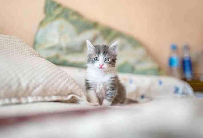 Erkek Kedi İsimleri