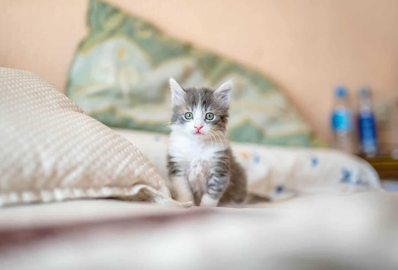 Kedinize İsim Vermek