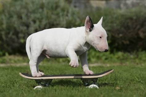 melhor cachorro para criança