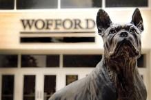 boston terrier estatua