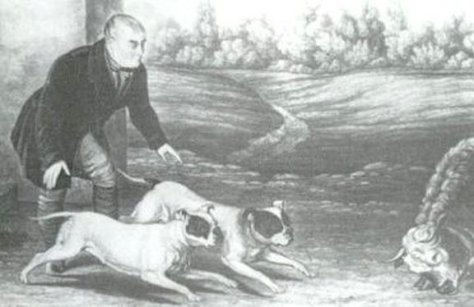 bulldog ingles antigamente