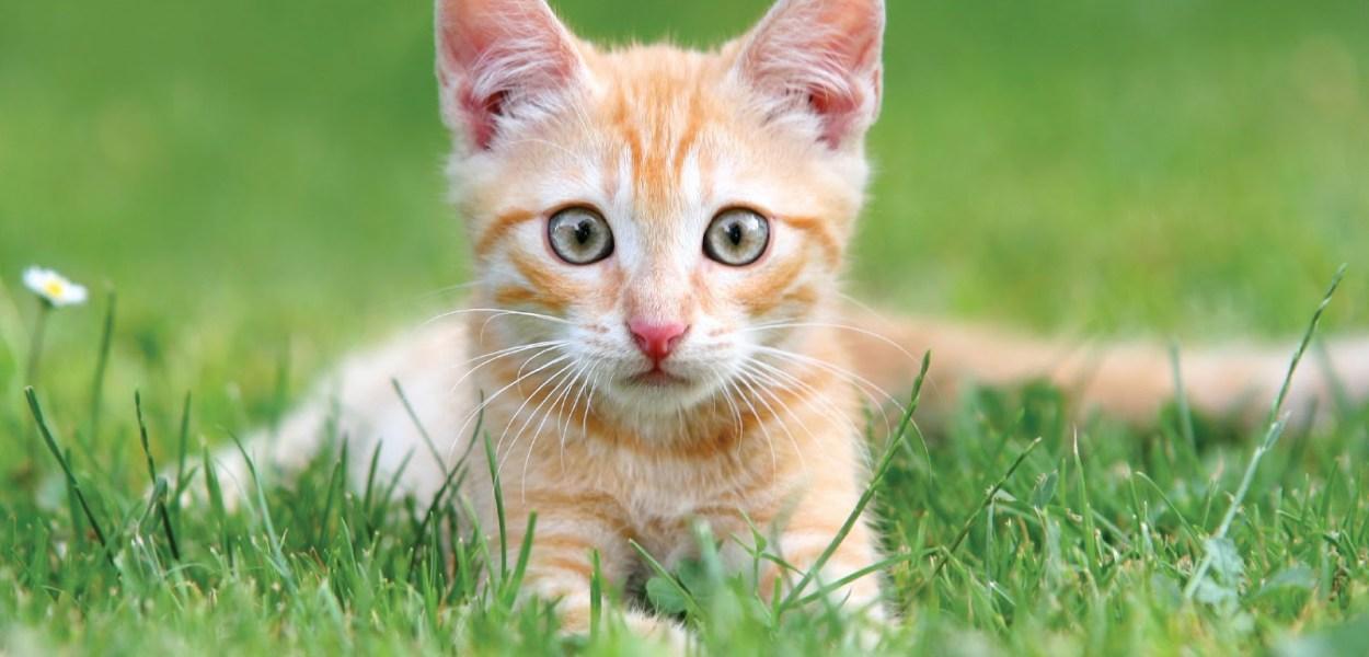 castrar gatos de graca