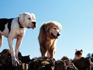 cachorro filme a incrivel jornada