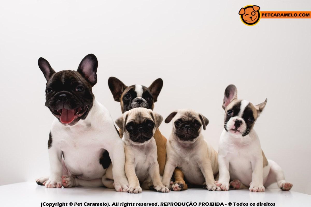 Piadas Sobre De E Com Cachorros Pet Caramelo