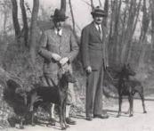 Dobermann cachorro