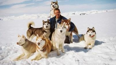 husky-siberiano-cachorros