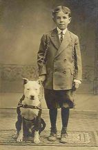 pitbull 1930