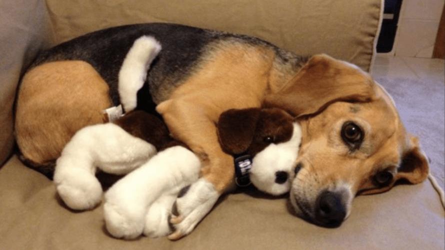 cachorro sozinho