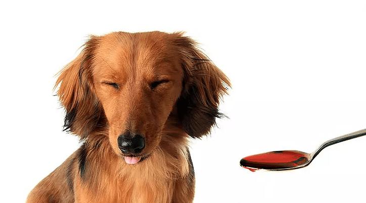 dar remedio liquido para cachorro