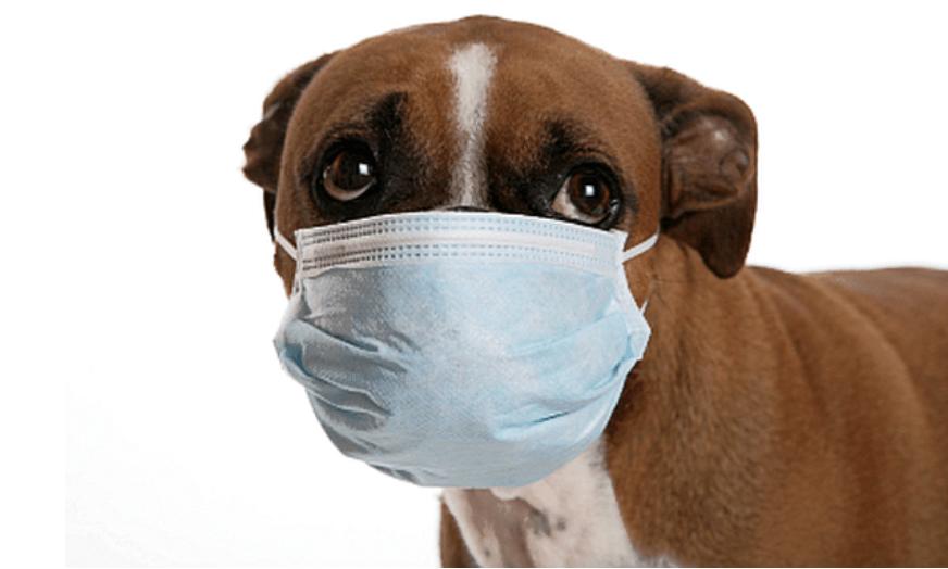 cachorro tossindo engasgado