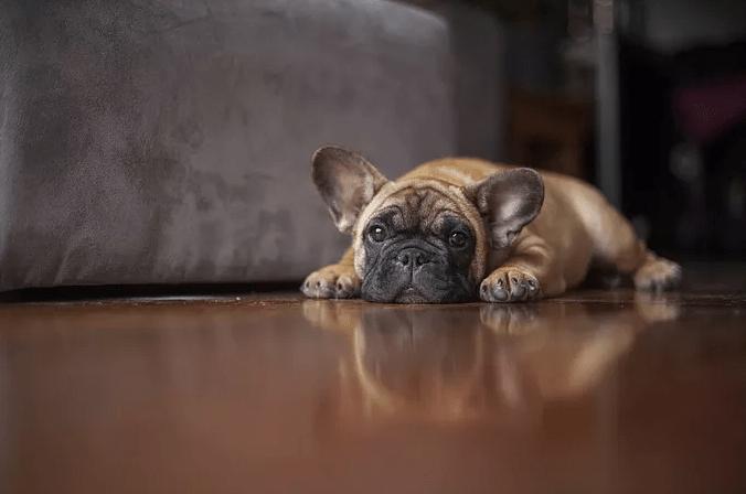cachorro com verme