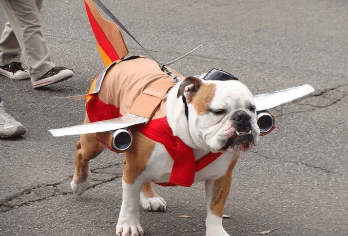 viajar com cachorro de aviao