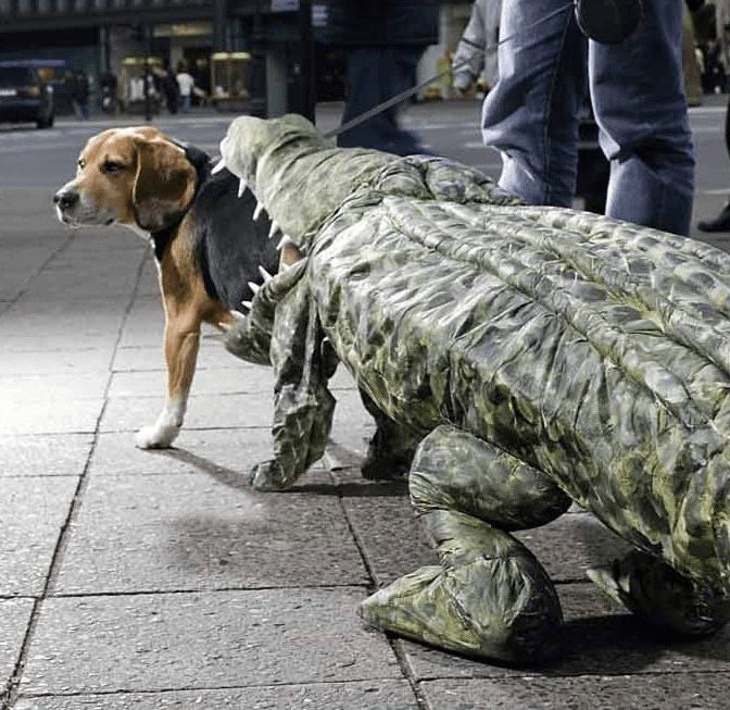 halloween fantasia para cachorro