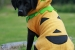 cachorro-halloween1