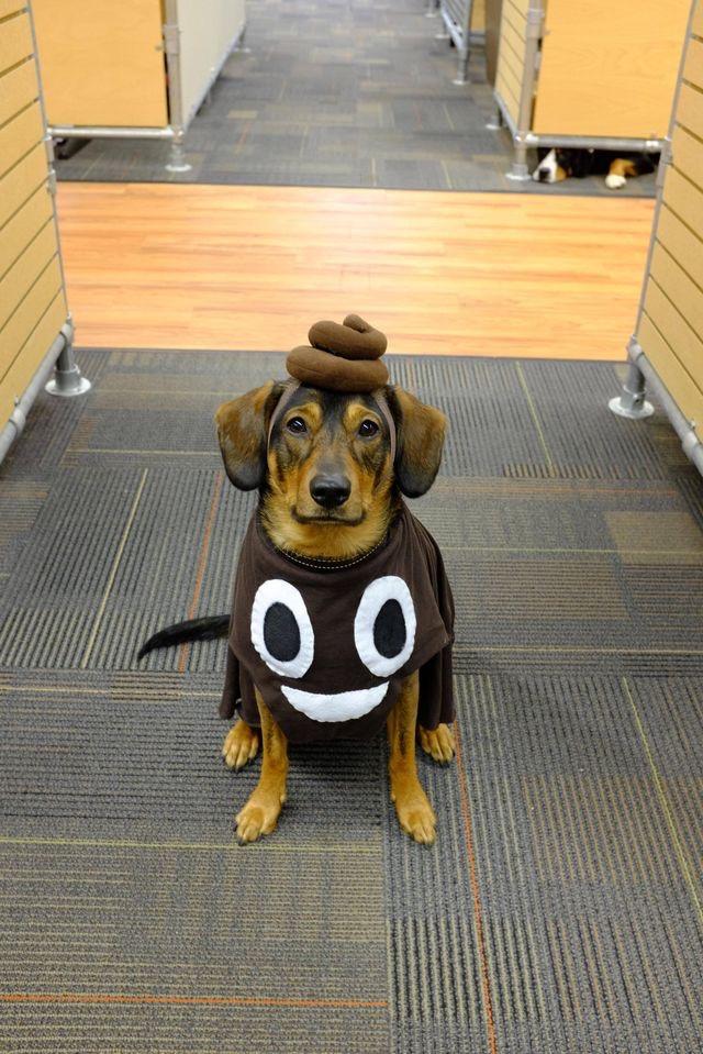 halloween fantasia cachorro emoticon