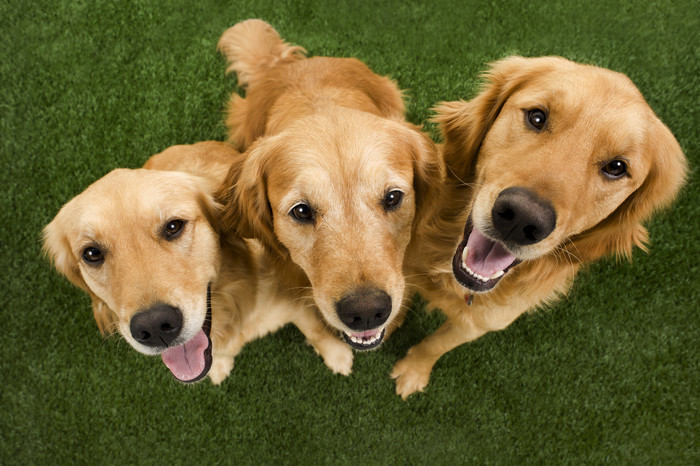 cachorros de medio porte