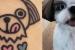atuagem de cachorro delicada-shih-tzu